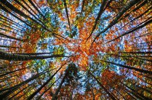 Baumwipfel in Herbstfarben
