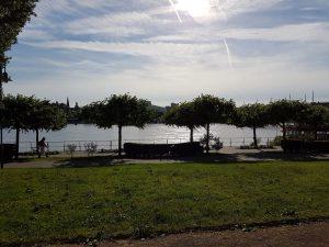 Beueler Rheinufer im grellen Sonnelicht