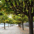 Rheinpromenade Bonn-Beuel Richtung Norden gesehen