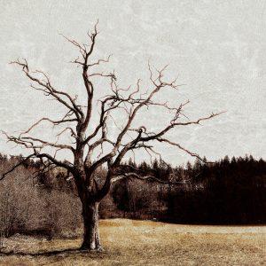 Blattloser Baum vor grauem Winterhimmel