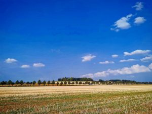 blauer Himmel über abgemähtem Feld