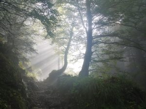 Sonnenlicht fällt durch die Baumkronen im Wald
