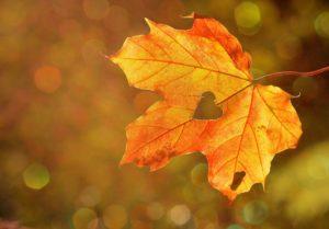 Herbstblatt im Gegenlicht mit herzförmigem Loch